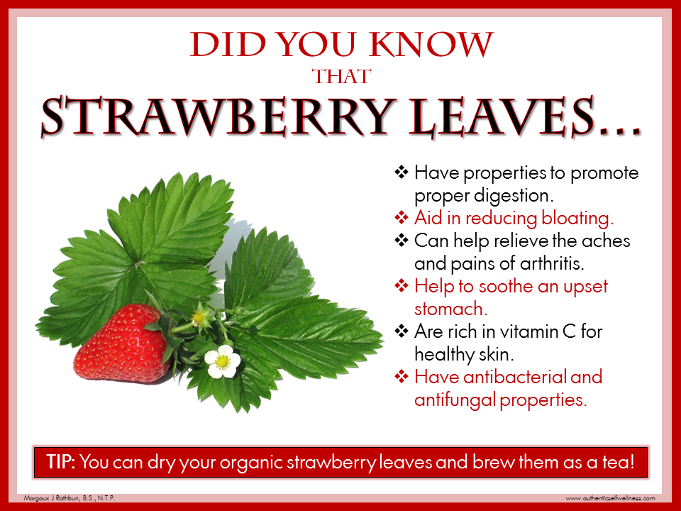 Strawberry Tops Leaves Tips And Information Every Bite